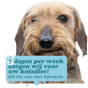 hondenuitlaat service Doris daycare