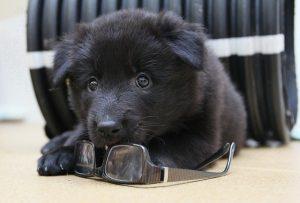 puppy-476800_640