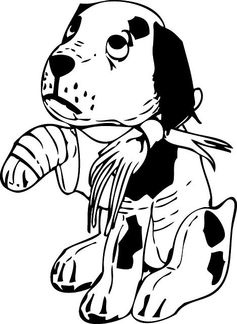 Taxiservice naar dierenarts Doris Daycare
